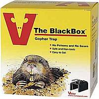 how to trap a gopher