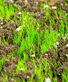 dry mulch new grass