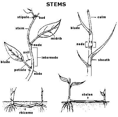Grass Weed Diagram Smart Wiring Diagrams