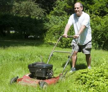 Lawn Care Services What To Know About