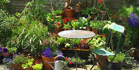 where do you put more plants